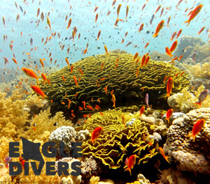 Coarl reef sharm el sheikh eagle divers