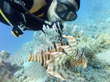 Camping Drving Eagle Divers Red Sea Sharm El Sheikh Ras Mohamed National Park Camping Lion Fish