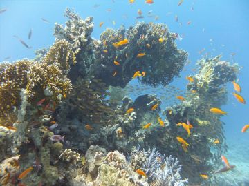 Camping Drving Eagle Divers Red Sea Sharm El Sheikh Ras Mohamed National Park Coral Reef